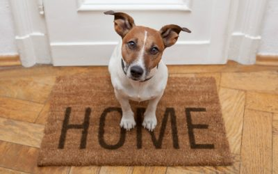 How to Prepare Your Pet for a Move